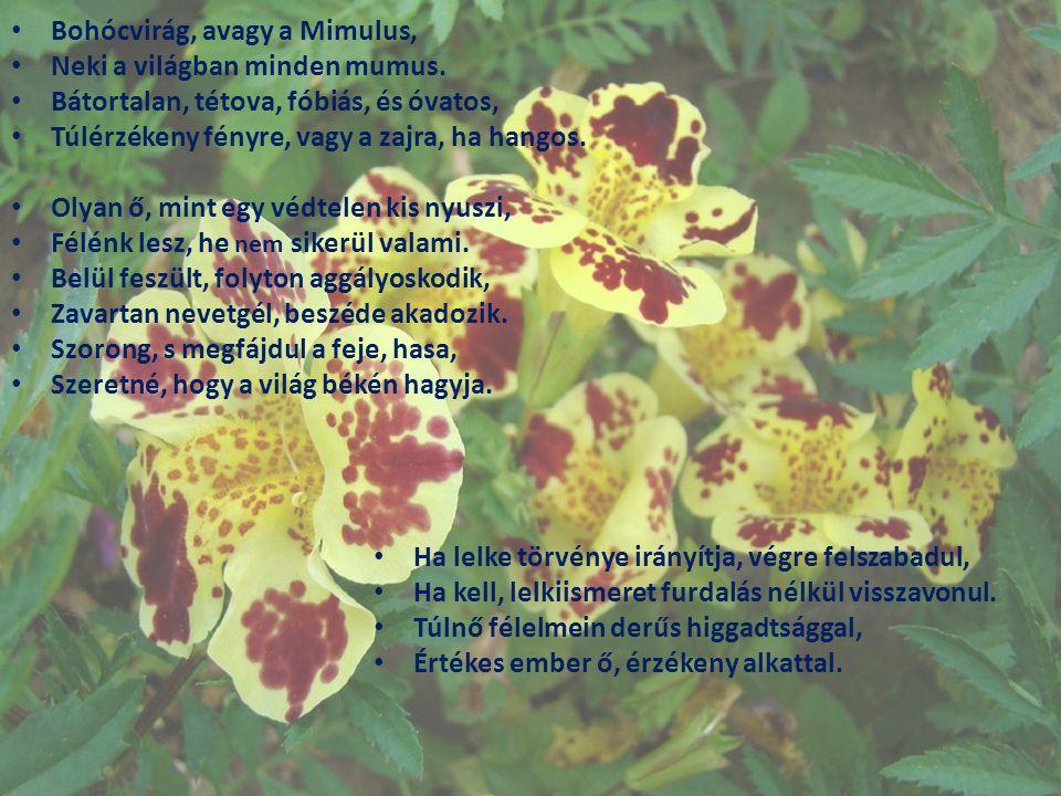 Bohócvirág, avagy a Mimulus,
