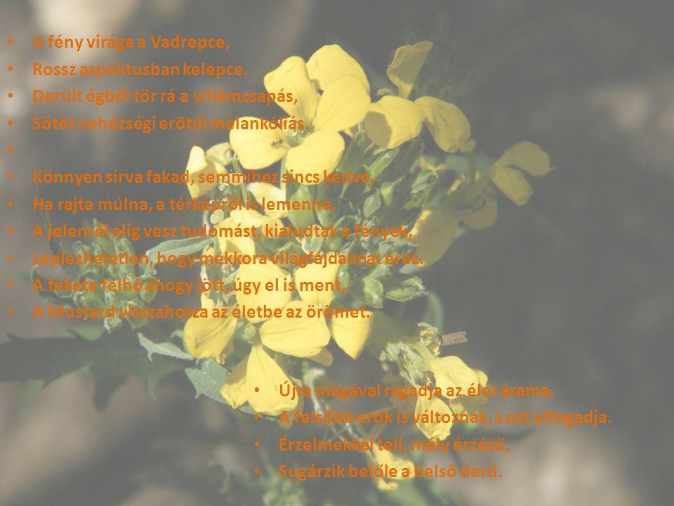 A fény virága a Vadrepce,