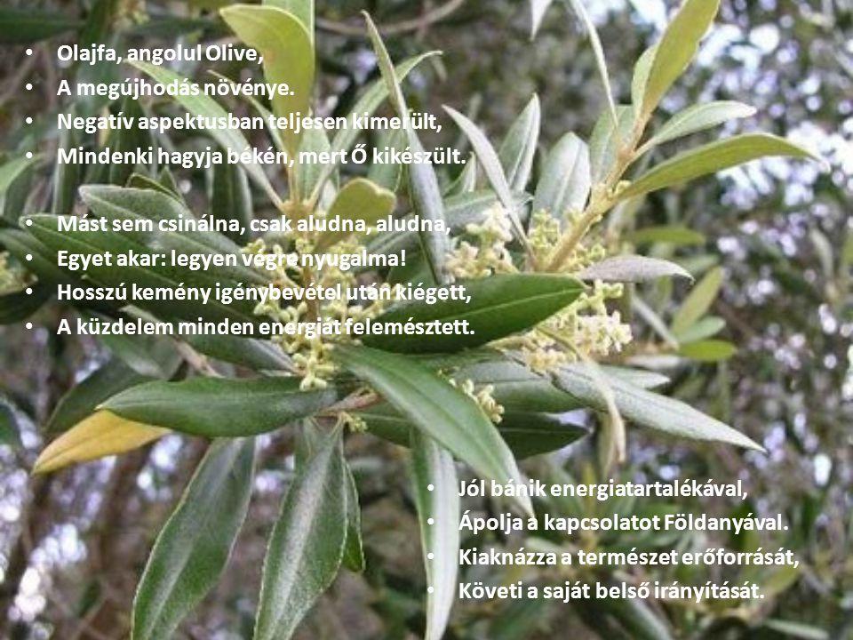 Olajfa, angolul Olive, A megújhodás növénye. Negatív aspektusban teljesen kimerült, Mindenki hagyja békén, mert Ő kikészült.