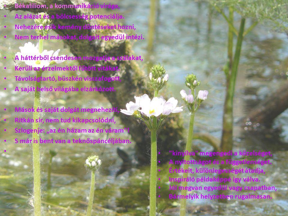 Békaliliom, a kommunikáció virága,