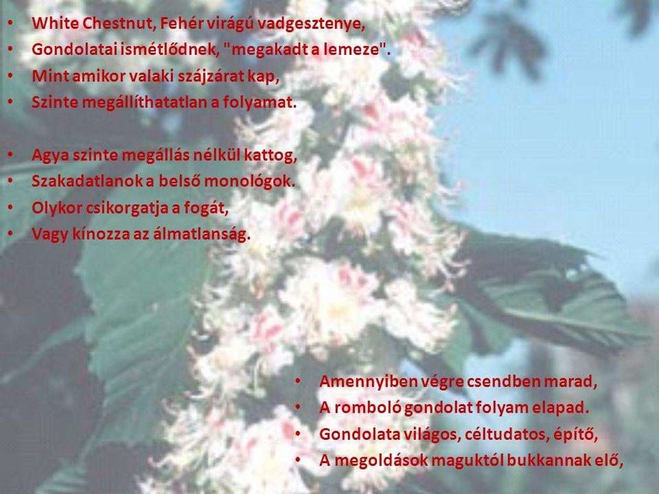 White Chestnut, Fehér virágú vadgesztenye,