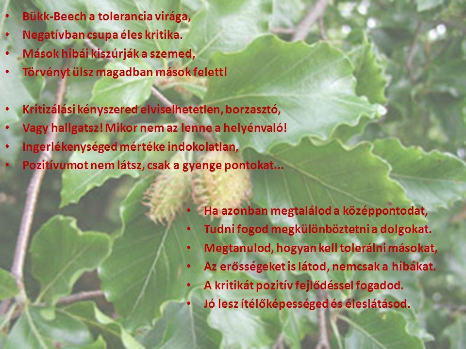 Bükk-Beech a tolerancia virága,