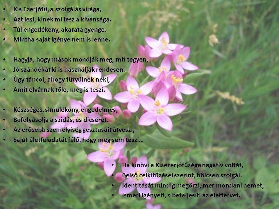 Kis Ezerjófű, a szolgálás virága,