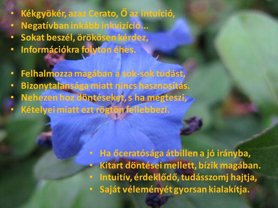 Kékgyökér, azaz Cerato, Ő az intuíció,