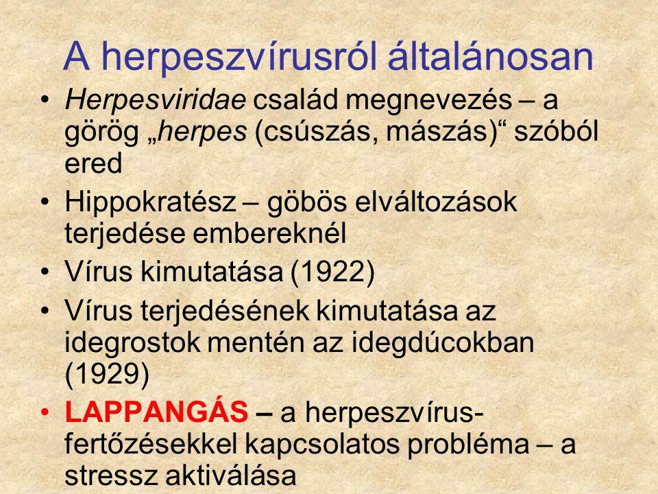 A herpeszvírusról általánosan