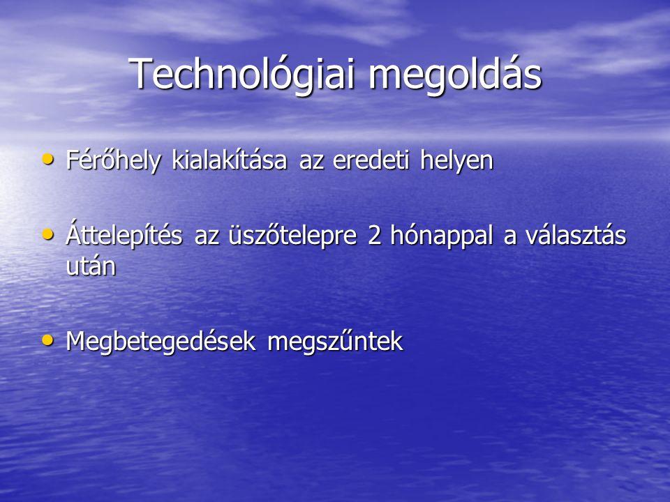 Technológiai megoldás