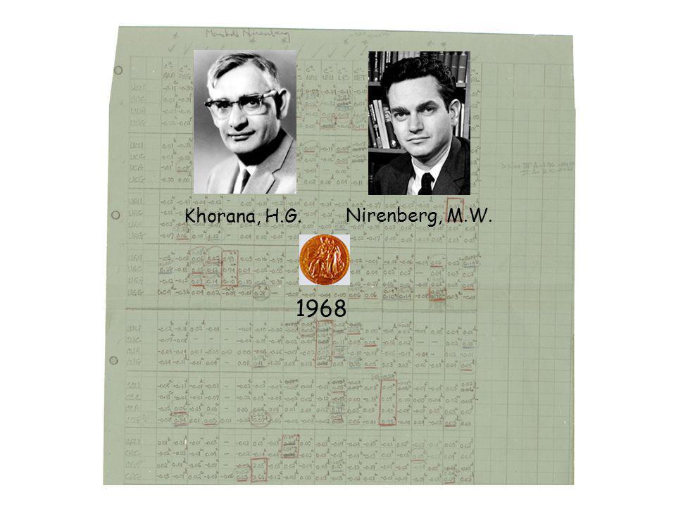 Khorana, H.G. Nirenberg, M.W. 1968