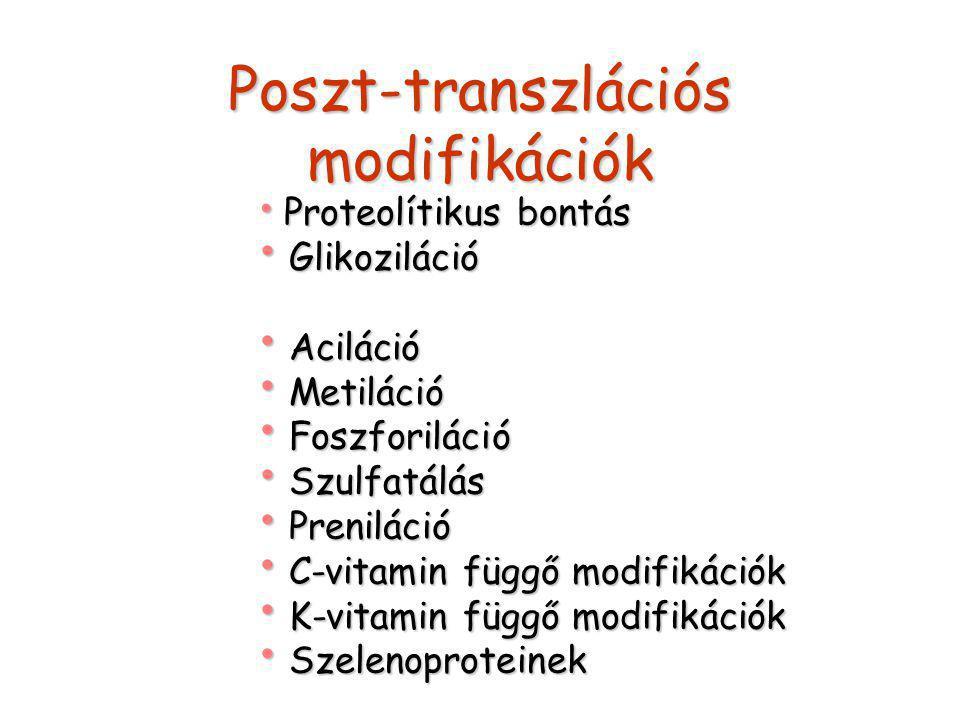 Poszt-transzlációs modifikációk