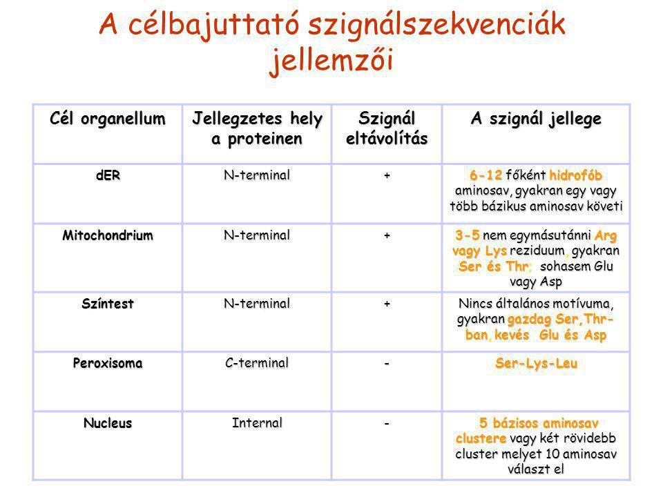 A célbajuttató szignálszekvenciák jellemzői