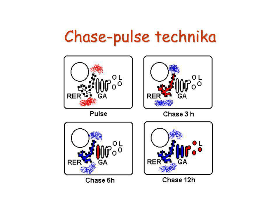 Chase-pulse technika