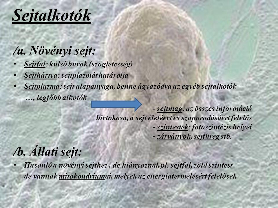 Sejtalkotók /a. Növényi sejt: /b. Állati sejt:
