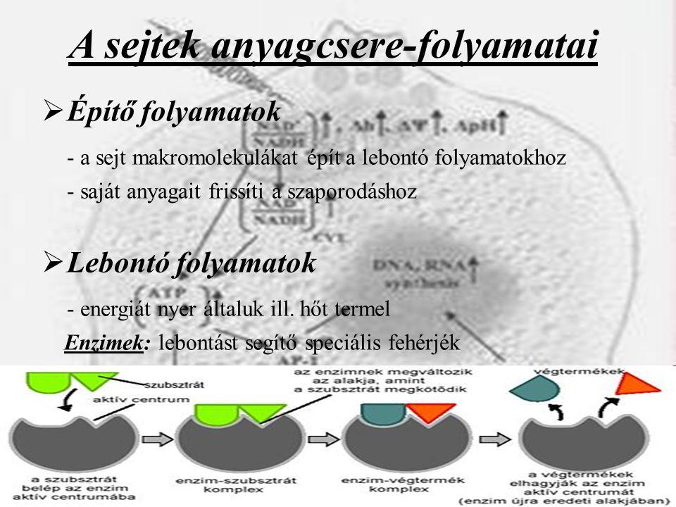 A sejtek anyagcsere-folyamatai