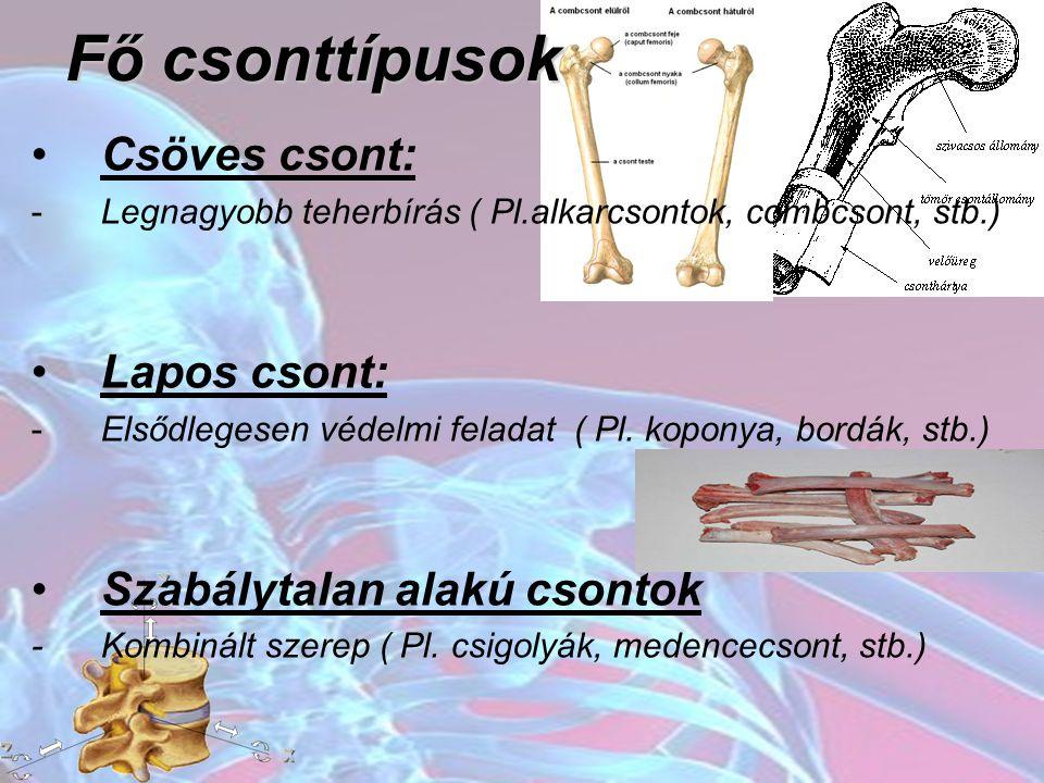 Fő csonttípusok Csöves csont: Lapos csont: Szabálytalan alakú csontok