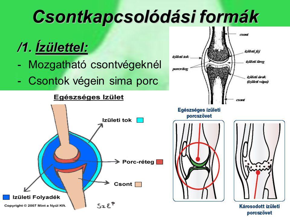 Csontkapcsolódási formák
