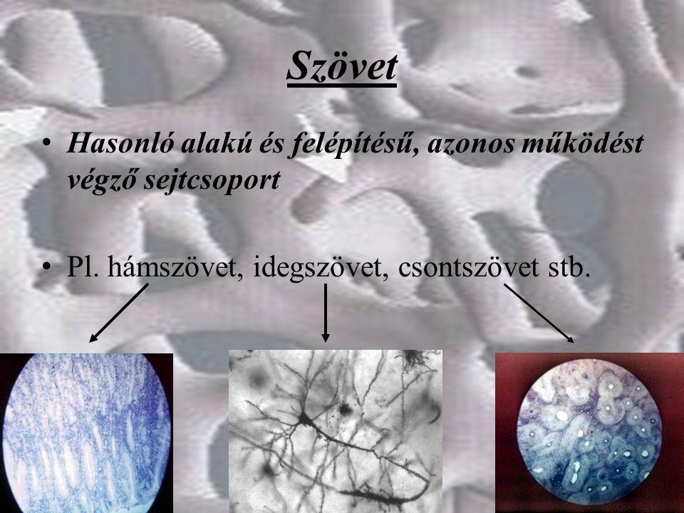 Szövet Hasonló alakú és felépítésű, azonos működést végző sejtcsoport