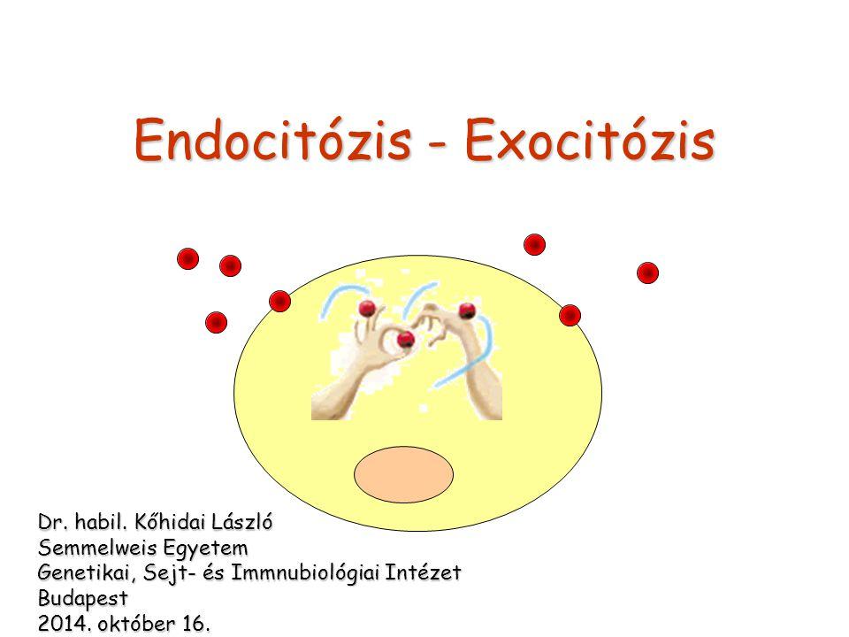 Endocitózis - Exocitózis