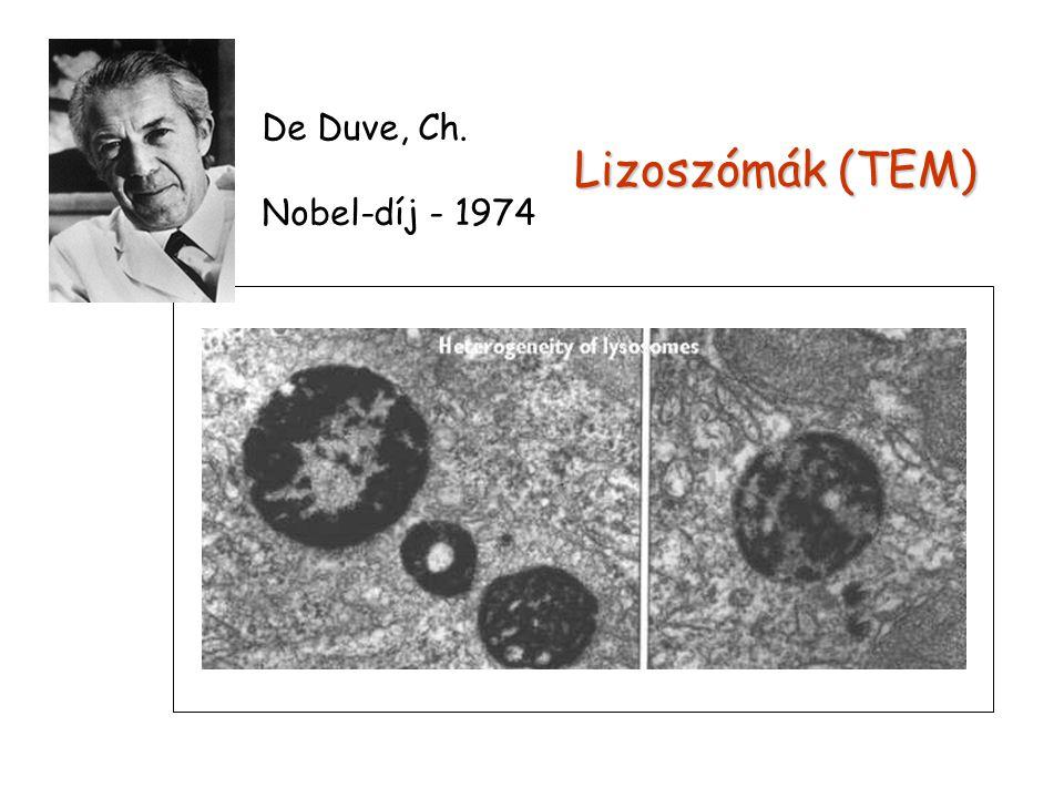 De Duve, Ch. Nobel-díj - 1974 Lizoszómák (TEM)