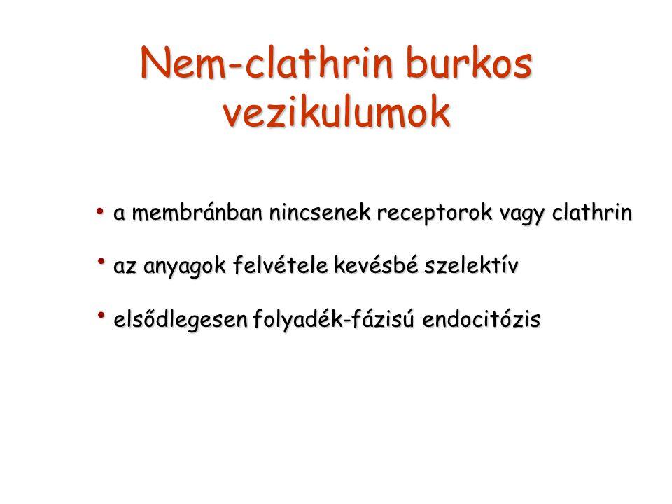 Nem-clathrin burkos vezikulumok