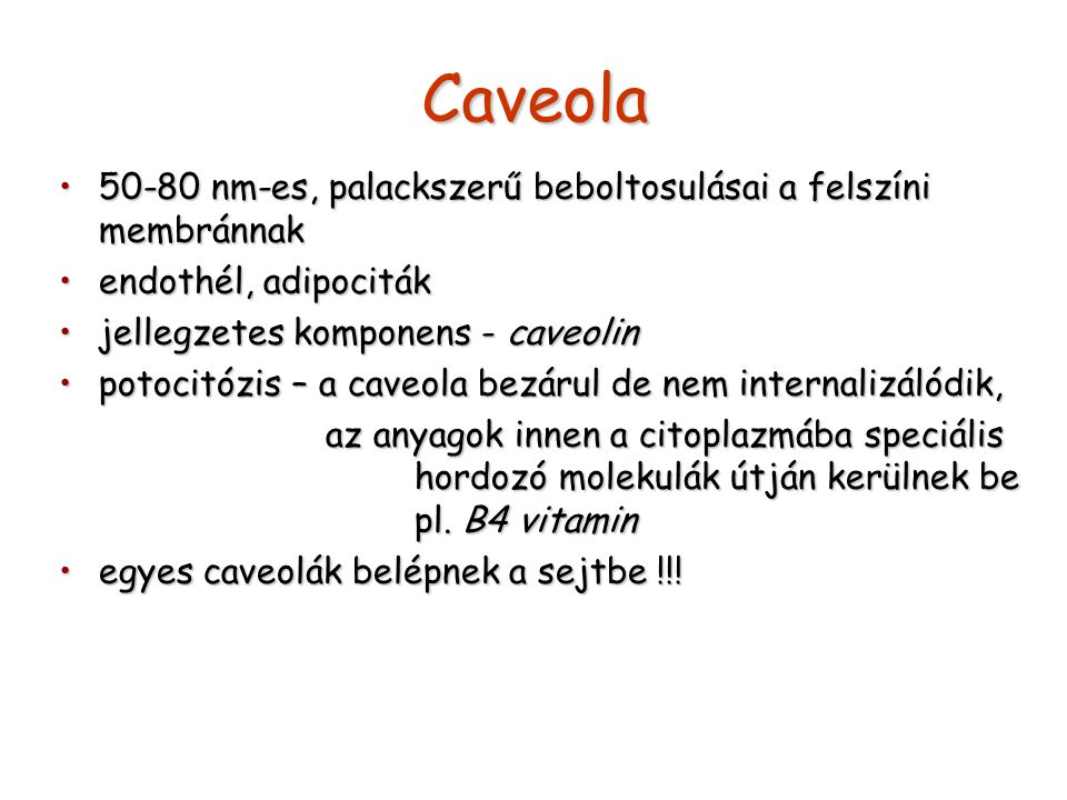 Caveola 50-80 nm-es, palackszerű beboltosulásai a felszíni membránnak