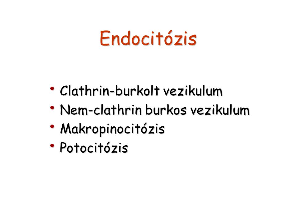 Endocitózis Clathrin-burkolt vezikulum Nem-clathrin burkos vezikulum