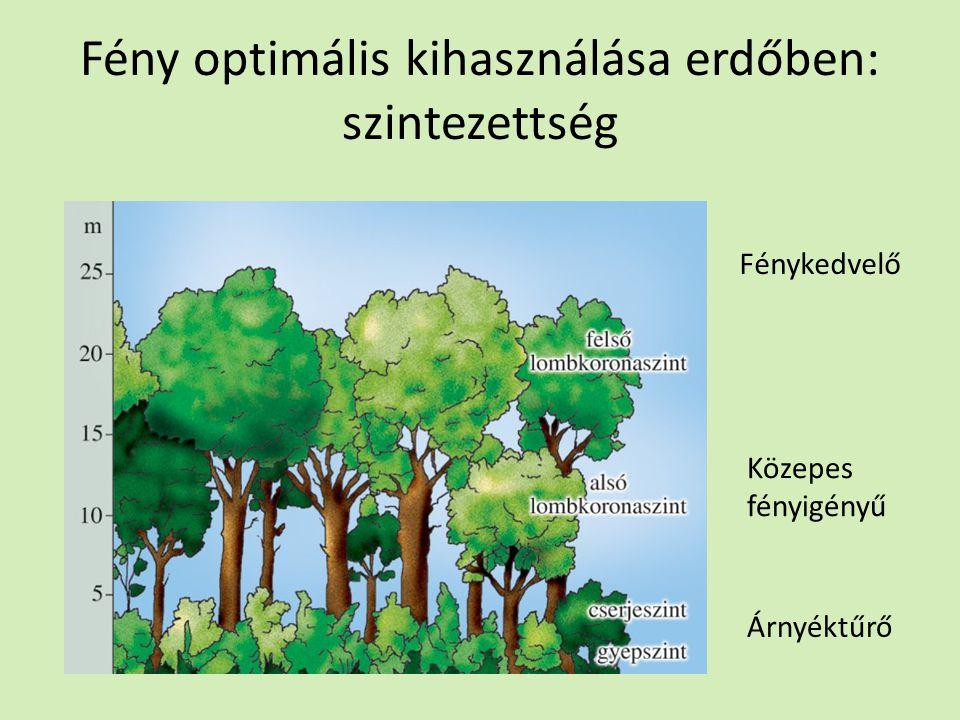 Fény optimális kihasználása erdőben: szintezettség