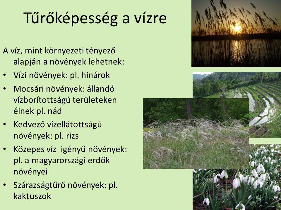 Tűrőképesség a vízre A víz, mint környezeti tényező alapján a növények lehetnek: Vízi növények: pl. hínárok.