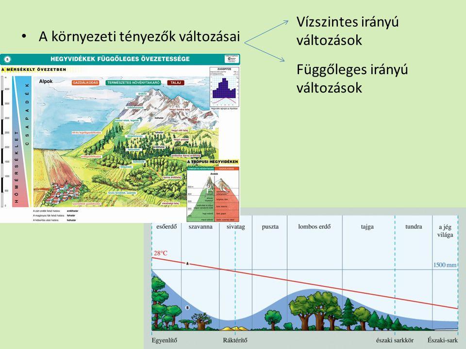 Vízszintes irányú változások A környezeti tényezők változásai Függőleges irányú változások
