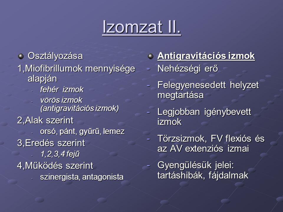 Izomzat II. Osztályozása 1,Miofibrillumok mennyisége alapján