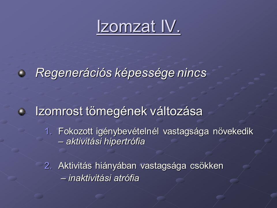 Izomzat IV. Regenerációs képessége nincs Izomrost tömegének változása