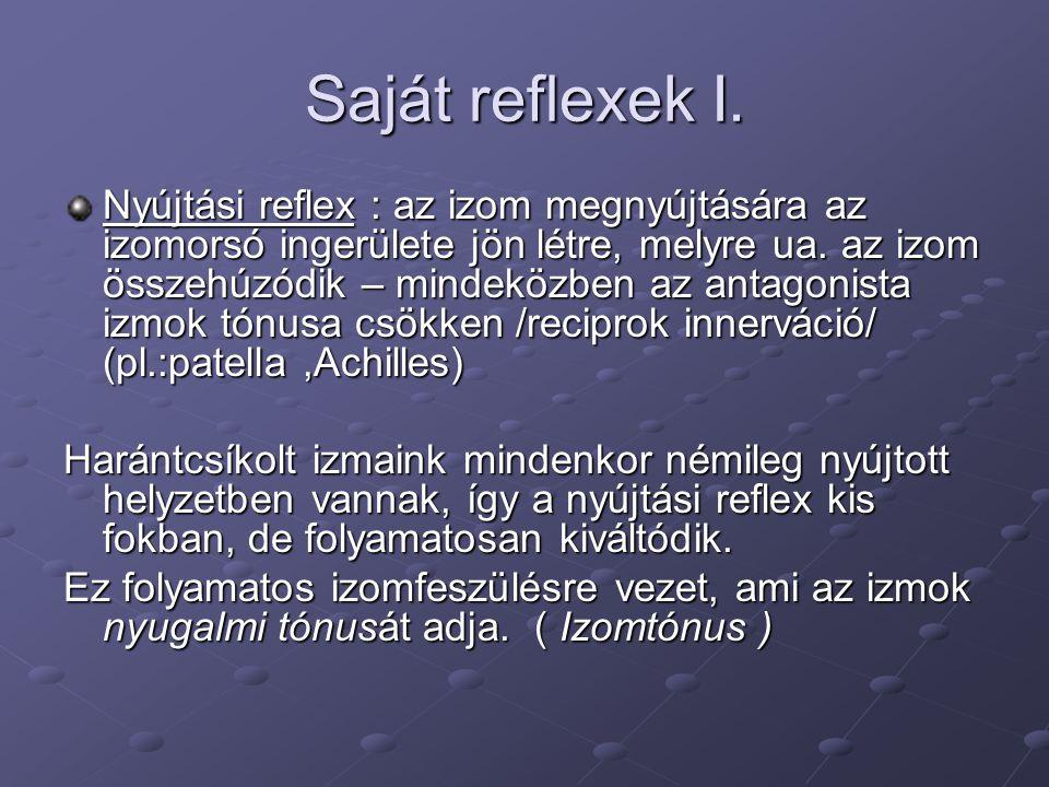 Saját reflexek I.