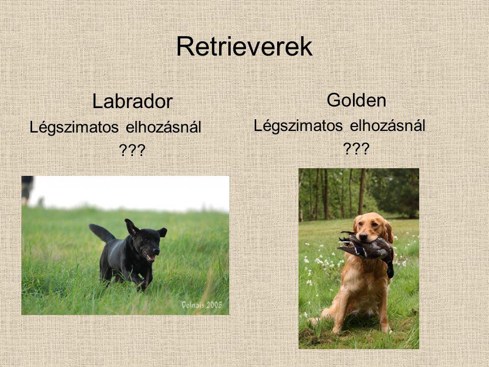 Retrieverek Labrador Golden Légszimatos elhozásnál
