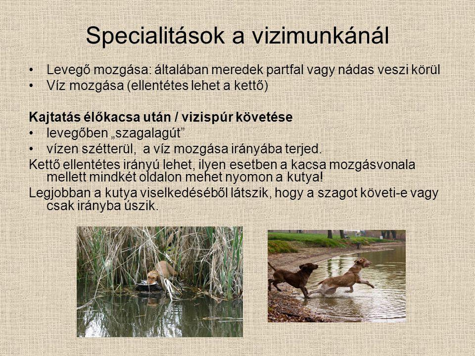 Specialitások a vizimunkánál