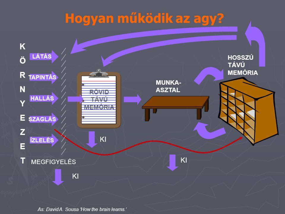 Hogyan működik az agy K Ö R N Y E Z T KI HOSSZÚ TÁVÚ MEMÓRIA MUNKA-