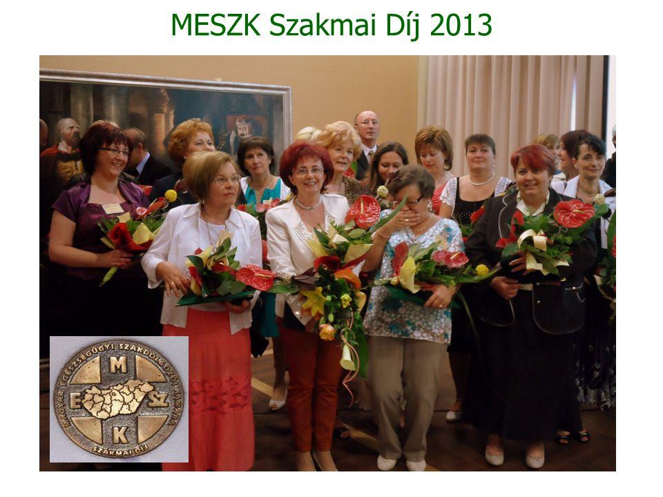 MESZK Szakmai Díj 2013