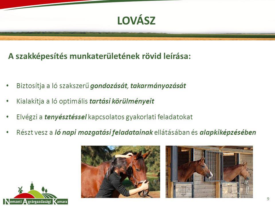 LOVÁSZ A szakképesítés munkaterületének rövid leírása: