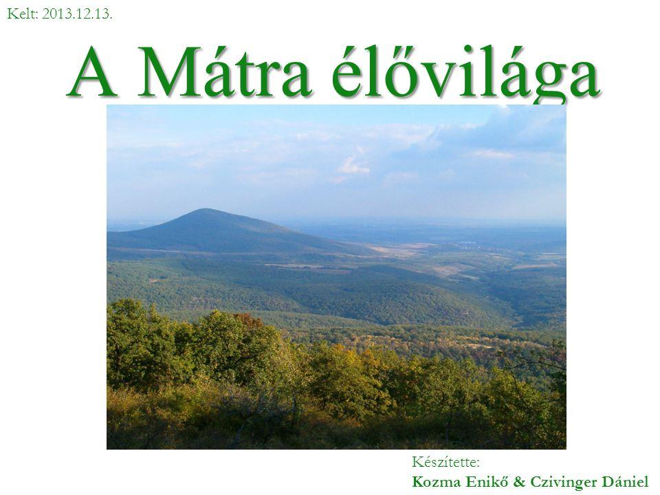 A Mátra élővilága Kelt: 2013.12.13.