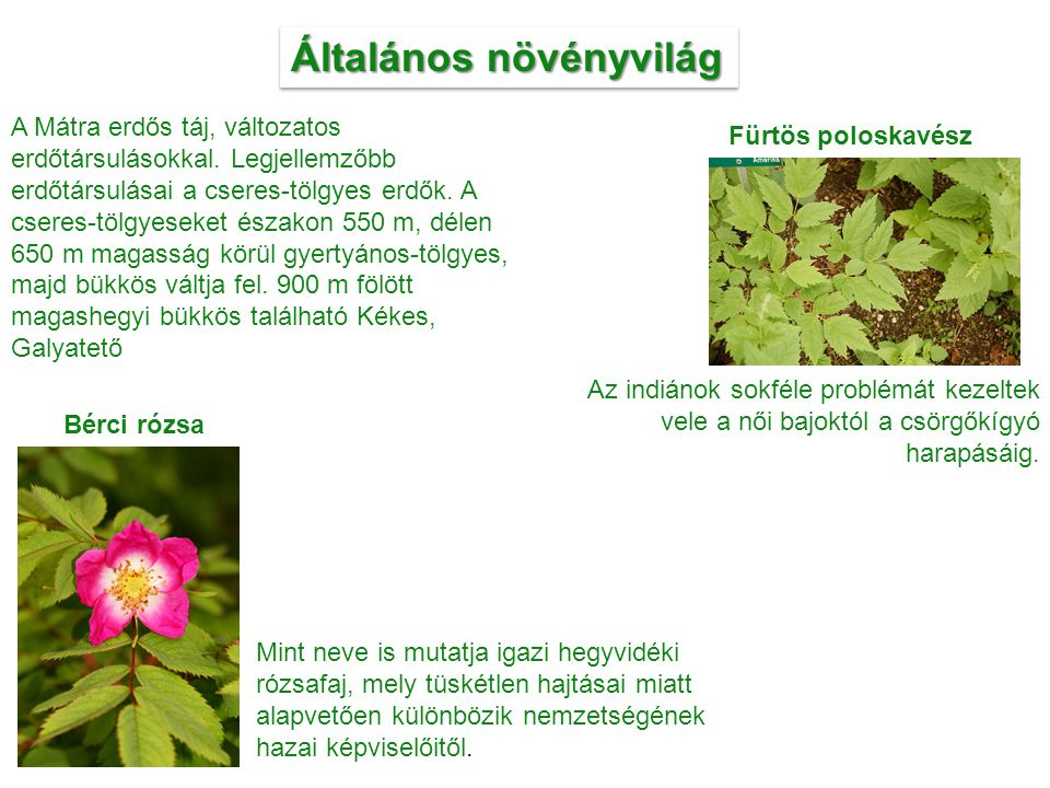 Általános növényvilág