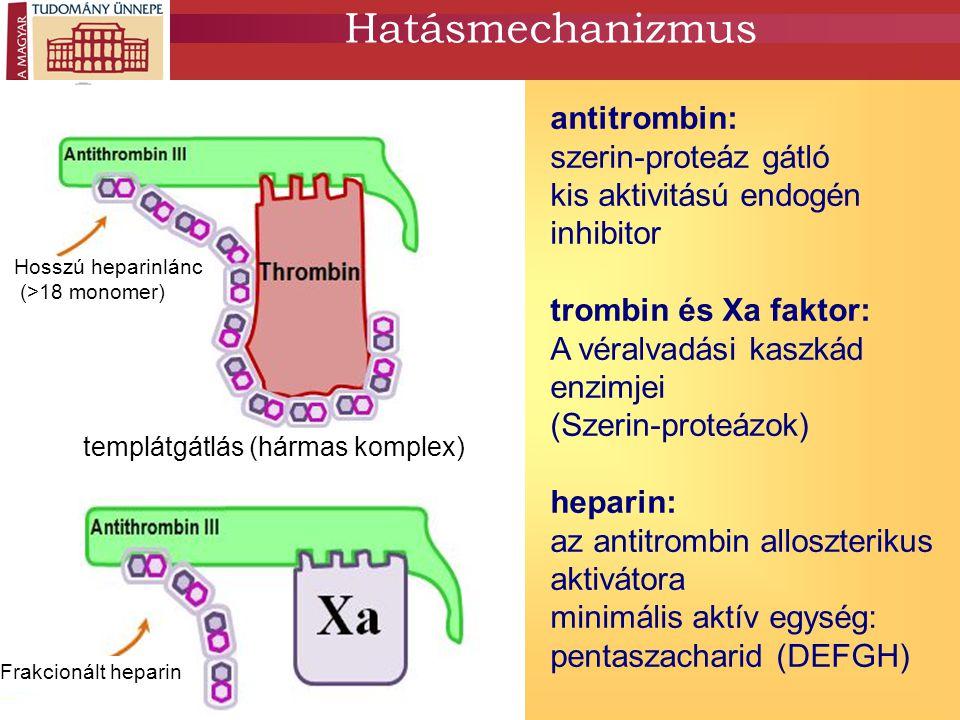 Hatásmechanizmus antitrombin: szerin-proteáz gátló