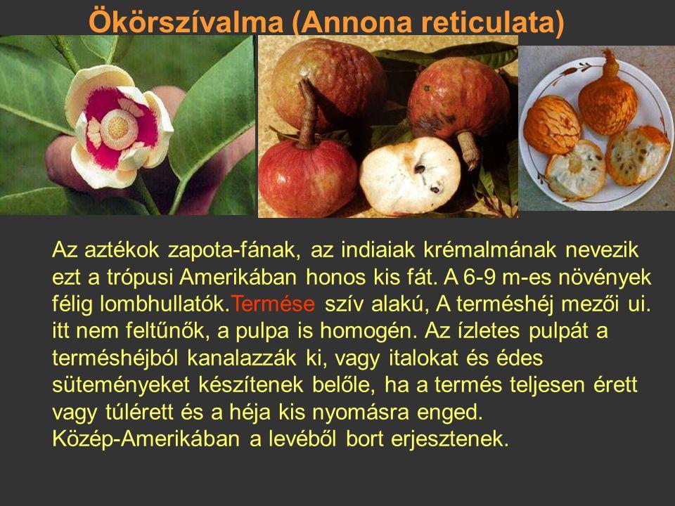 Ökörszívalma (Annona reticulata)