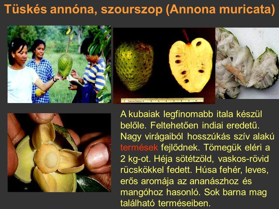 Tüskés annóna, szourszop (Annona muricata)