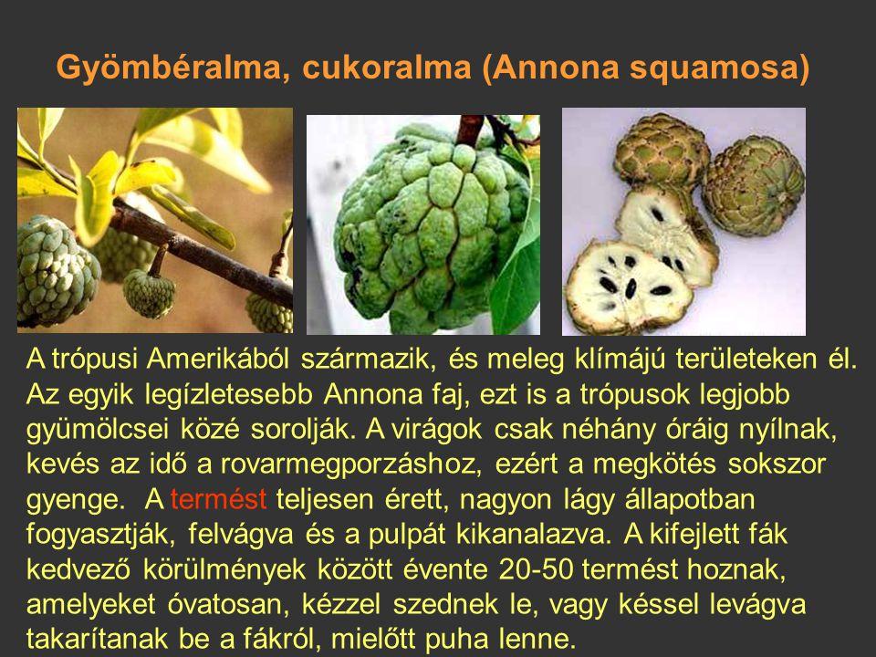 Gyömbéralma, cukoralma (Annona squamosa)