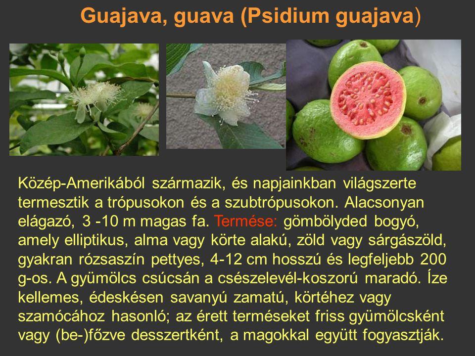 Guajava, guava (Psidium guajava)