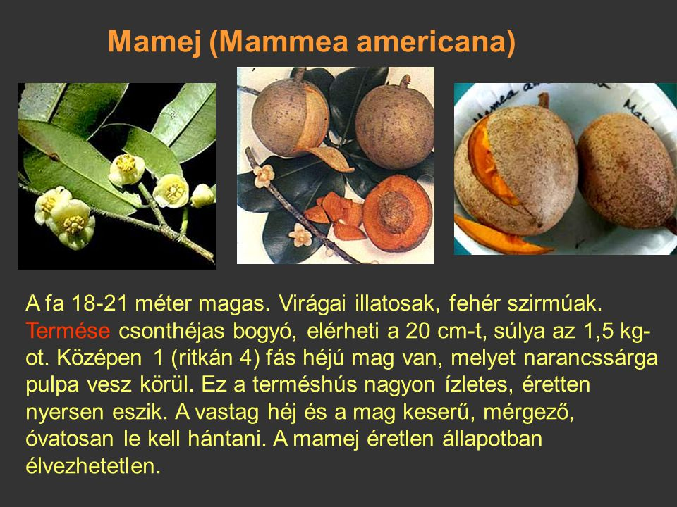 Mamej (Mammea americana)