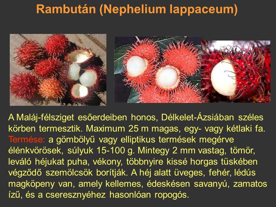 Rambután (Nephelium lappaceum)