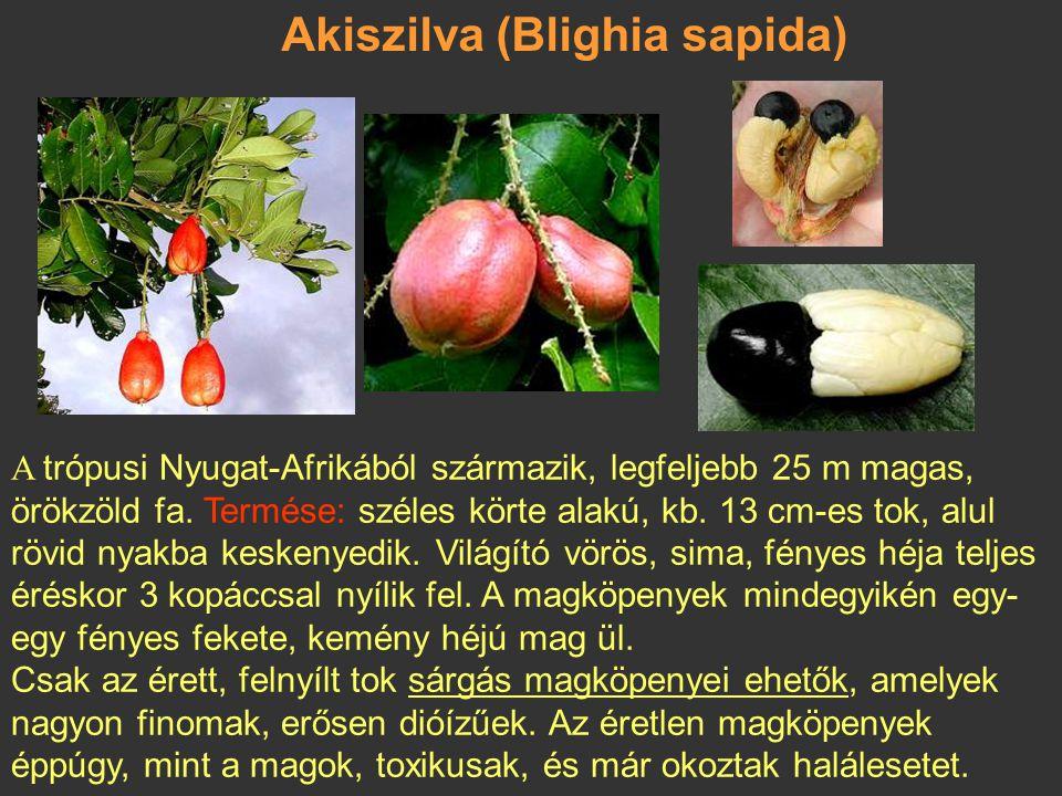 Akiszilva (Blighia sapida)