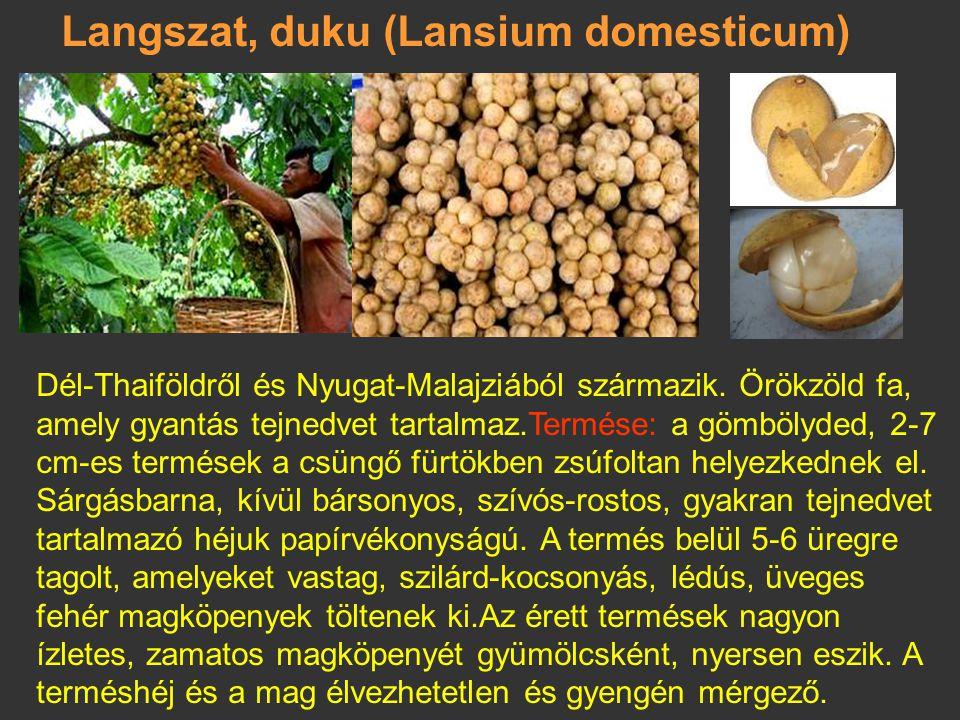 Langszat, duku (Lansium domesticum)