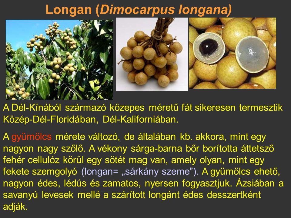 Longan (Dimocarpus longana)