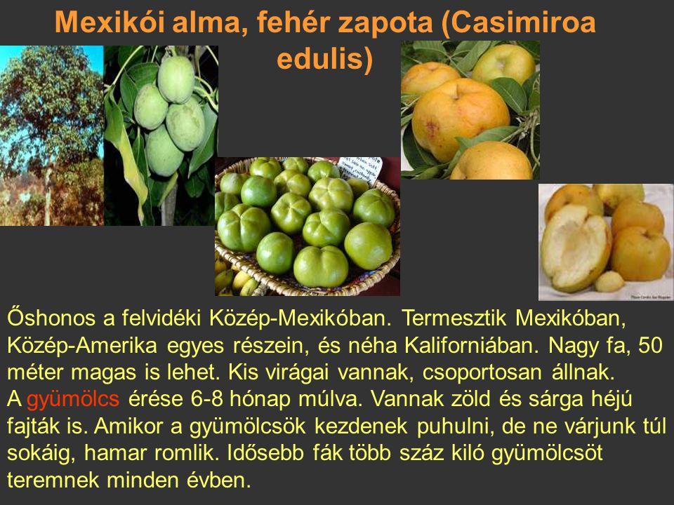 Mexikói alma, fehér zapota (Casimiroa edulis)
