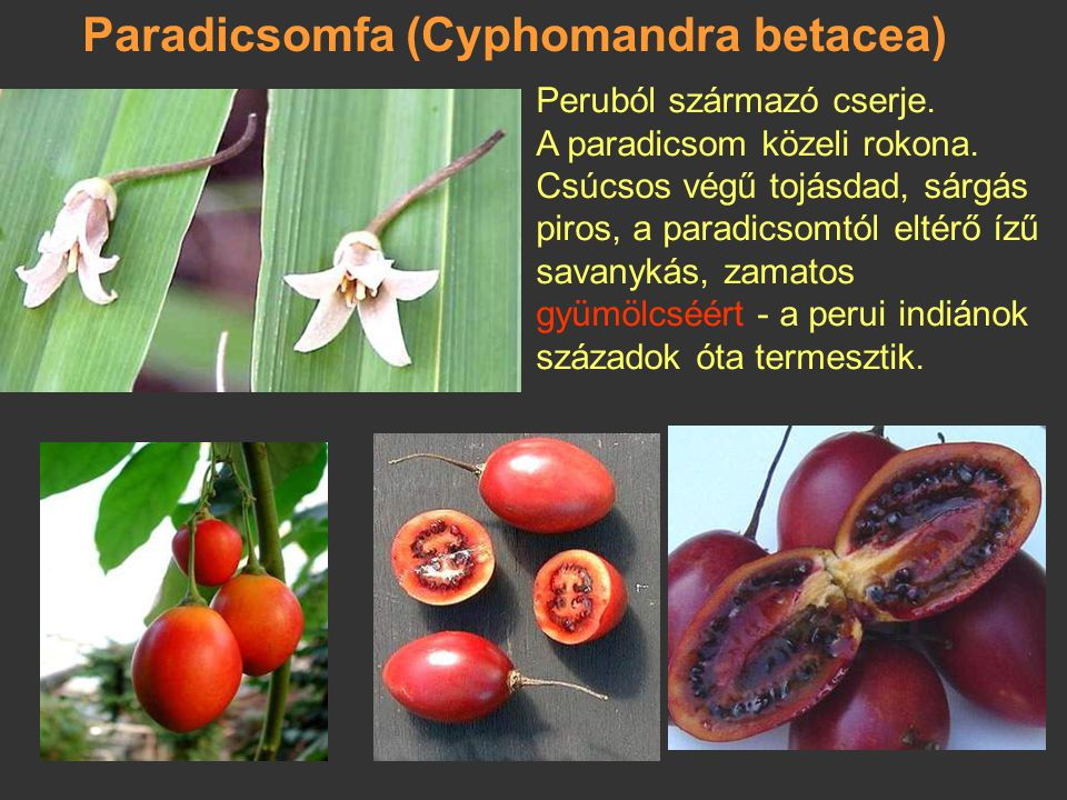 Paradicsomfa (Cyphomandra betacea)