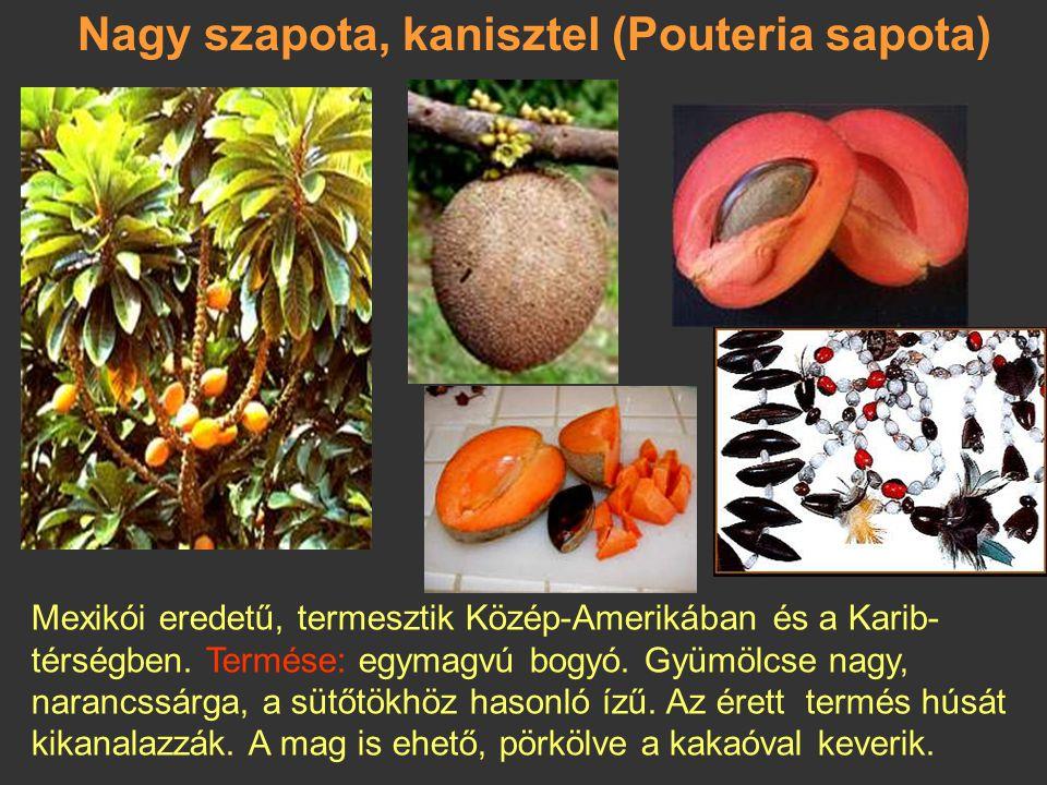 Nagy szapota, kanisztel (Pouteria sapota)